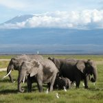Elefantes Kilimanjaro en Kenia