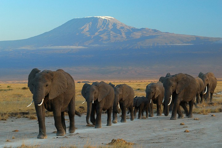 Parque Nacional Amboseli Elefantes