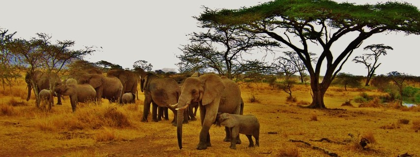 Familia de elefantes en Samburu