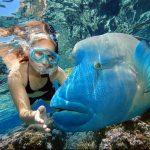 Fauna marina buceando en Australia