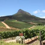 Viñedos en la ruta del vino de Ciudad del Cabo